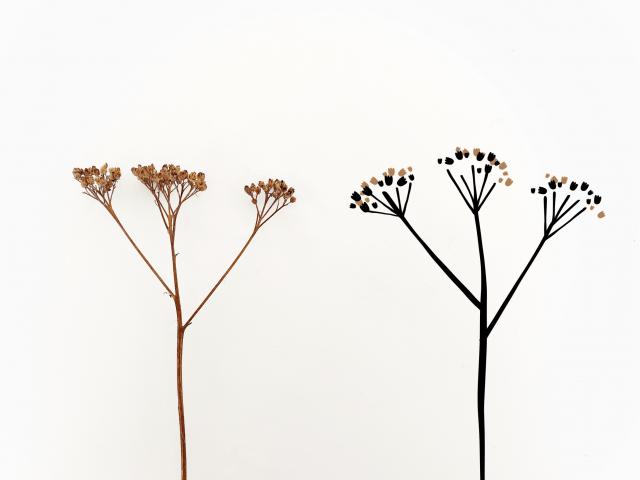 Gratis-ritakurs-ritamedmaja-rita-växt