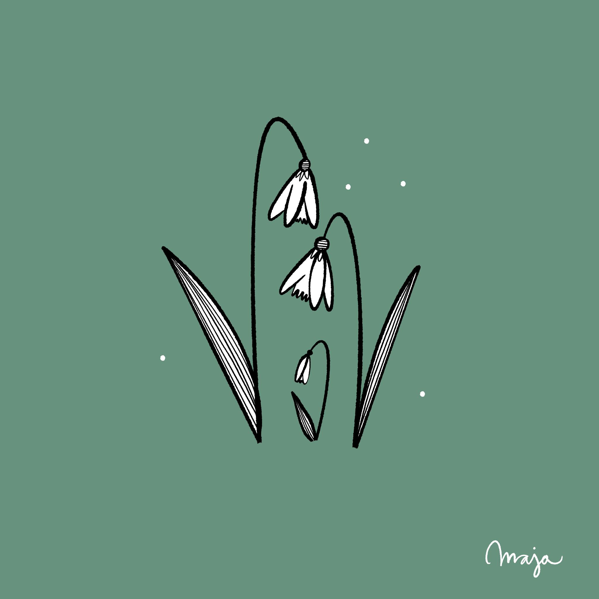 snödroppe illustration ritakurs